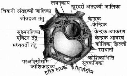 पादप कोशिका का चित्र